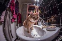 kot w łazience